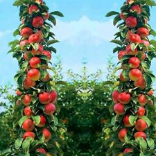 30 pcs Bonsai Apple Tree seeds rare fruit bonsai indoor plant for home garden vi