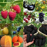 Großhandel Obst Saatgut Obstbäume Saatgut Dekor Zimmerpflanze Pflanzen Seeds