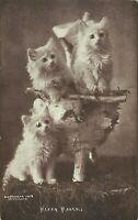 C E Bullard Kittens Cats Merry Makers 1903 Postcard