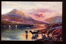 c1910 Tuck Cattle grazing Bala Lake north Wales Uk landscape postcard