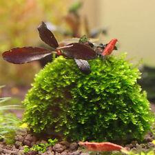 Aquarium Fish Tank Media Moss Ball Filter Fish Aquatic Decorations Pet Supplies