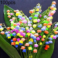 RARE COLORFUL LILY OF THE VALLEY CONVALLARIA MAJALIS PERENNIAL FLOWER SEEDS 100