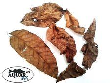 Heilmittel Fische Walnuss Baum Blätter Laub 20 Stück Pilzbefall Bakterienbefall