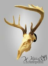 Metal European Mount Deer Skull Hanger Bracket Hook
