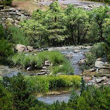 1 yard Green River Scenic Landscape Elizabeth's Studio Cotton Quilt Fabric 425