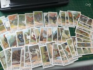 Cigarette cards reprints/repros of F & J Smith-Fowls, Pigeons & Dogs-1 set