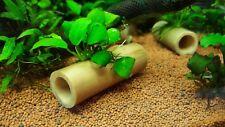 Anubias nana petite on bamboo shelter live freshwater aquarium decoration