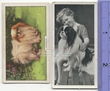 Japanese Chin Terrier Dog 2 Different Vintage Ad Trade Cards #3 Canine Pet