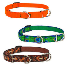 """Lupine Martingale Combo Collars 3/4"""" Width Made in the Usa Lifetime Guaranteed"""