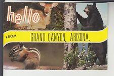 Chrome 2 View Animal Hello from Grand Canyon Az Arizona Dr54453B