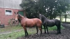 Kräuter zur Entwurmung für Pferde (bewährte Mischung)