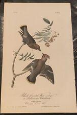 Original 1st Ed. Audubon Birds Of America 8vo 1840: Black Throated Wax Wing 245