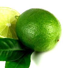 """ZITRONE Limette """"Citrus hystrix""""  BIO LIMONE 20-30 cm PFLANZE Kaffernlimette"""