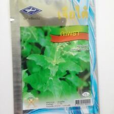 2400 seeds Thai Holy Basil Kaprao,Ocimum Sanctum Tulasi Herb Food