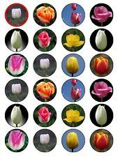 "x24 1.5"" Tulip Flower Birthday Wedding Cupcake Topper On Edible Wafer Rice Paper"