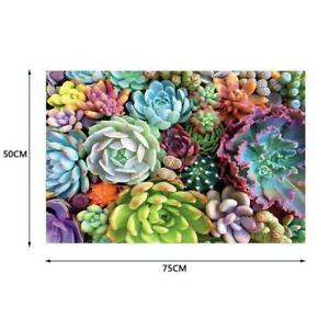 1000 Piece Succulent Spectrum Plants Puzzle Adult Children NEW Holiday B6I5