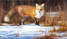 Fox On The Run Animal Print By Edward Aldrich