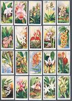 1925 Carreras Orchids Tobacco Cards Complete Set of 24