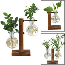 Hydroponic Bonsai Plant Glass Vase Flower Pot Wooden Frame Stand For Home Decor