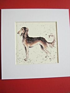 "SALUKI DOG Mounted Print 8 x 8"" Watercolor Print Art Picture"