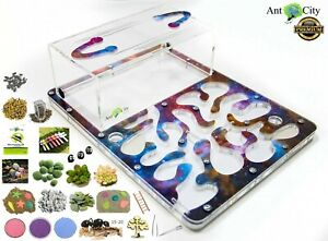 Ant Farm , ant nest , ant city , ant nest+ ant colony Messor +work ant 15-20