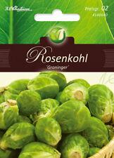"""choux de Bruxelles """" Groninger """", graines, braqssica Oleracea, légumes,"""