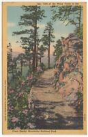One of Many Trails in Great Smoky Mountains National Park Vintage Postcard