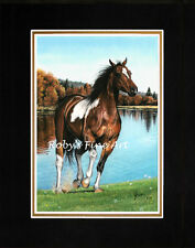 "Matted Paint Horse Art Print Pinto 8"" x 10"" Mat ""Foot Loose"" by Artist Roby Baer"