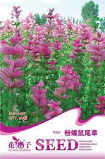 Original Package 50 Sage Seeds Pink Butterfly Sage Salvia Farinacea Seed A158