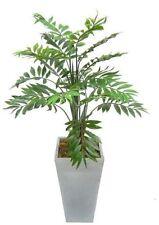Plants & Seedlings