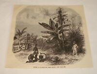 1877 magazine engraving ~ SCENE IN GUADELOUPE, West Indies