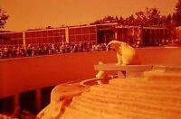 UH14 ORIGINAL KODACHROME 1960s 35MM SLIDE PORTLAND ZOO POLAR BEARS OREGON BLDG