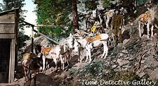 Pack Burros at Silver Mine, Rocky Mountains, CO - c1900 - Historic Photo Print