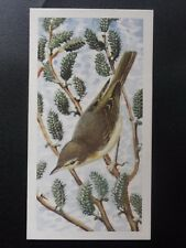 No.12 WILLOW WARBLER - Bird Portraits (with address) by Brooke Bond & Co. 1957