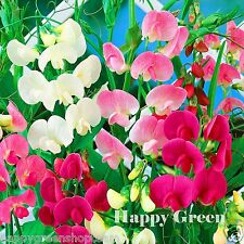 Eterno Sweet Pea Mix - 40 semillas-Lathyrus Herbal Perenne