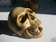 HUMAN SKULL MODEL WITH HINGED  - Stage Prop - Ornament - VOTIVE GIFT - WEIRD