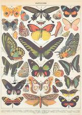 Geschenkpapier Bogen Schmetterlinge  / G2