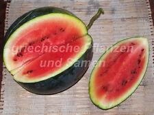 🔥 🍉 Mini-Wasser-Melone BLACK TAIL MOUNTAIN 5 Samen Obst historische Sorte süss