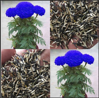 100 PCS Seeds Rare Half Black And Red Rose Bonsai DIY Home Garden Flower NEW Q A
