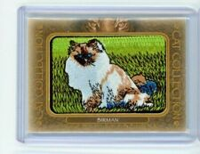 2020 Goodwin Champions Birman Cat Collection Patch