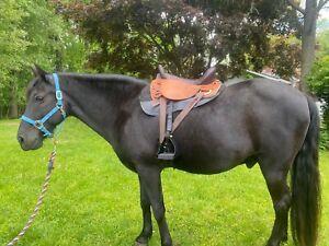 "Kuda endurance saddle 16"" great condition"