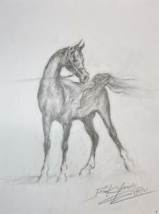 "Arabian Horse Art Original Graphite Pencil Drawing 11""x14"" Framed"
