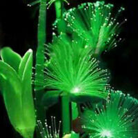 100Pcs Rare Emerald Fluorescent Flower Seeds, Night Light Emitting Plants W87