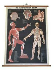 Vintage Human Anatomy Pull Down Chart, Human Body Anatom,Body Pull Down Chat