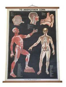 Vintage Human Anatomy Pull Down Chart, Human Body Anatom,Body Pull Down Chat