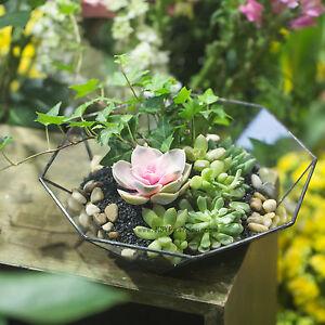 Indoor Flowers Bonsai Pot Geometric Terrarium Box Succulent Plant Pot Decoration