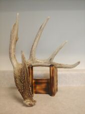 New Listing5 point Whitetail deer Antlers Horns Shed craft, decor