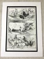 1853 Print Prize Winning Cattle Hens Birmingham Poultry Show Original Antique