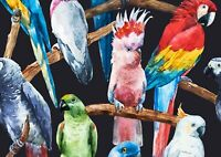 Awesome Funky Parrots Poster Print Size A4 / A3 Bird Animals Poster Gift #8445