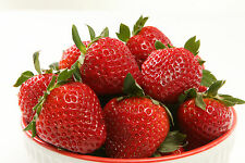 Strawberry 'Temptation' Seeds Large Sweet Edible Berries Fragaria x ananassa